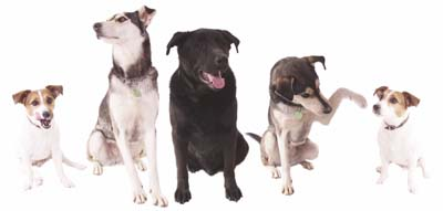 Group of 5 Dogs