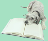 dog with book