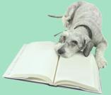 Agility Training Dogs Brisbane