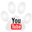 Urban Dog Training on YouTube